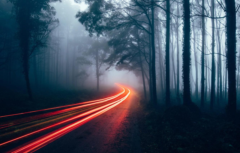 Фото обои дорога, лес, свет, огни, туман, выдержка, дымка