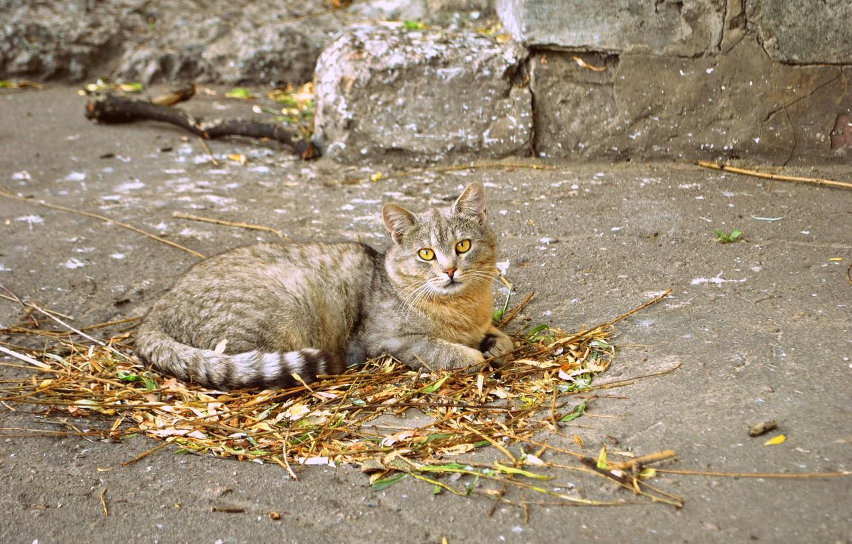 Фото обои лето, кот, природа