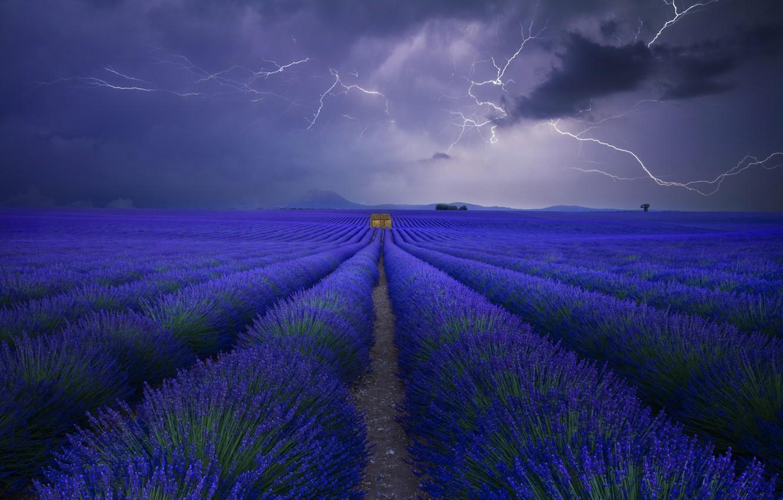 Фото обои поле, небо, тучи, молнии, лаванда