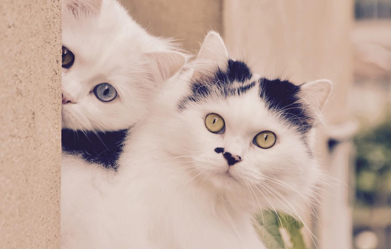 Фото обои кошка, взгляд, котёнок