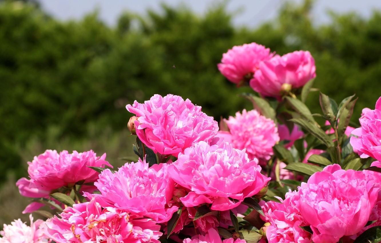 Красивые горные пейзажи весна с тюльпанами фото время моего