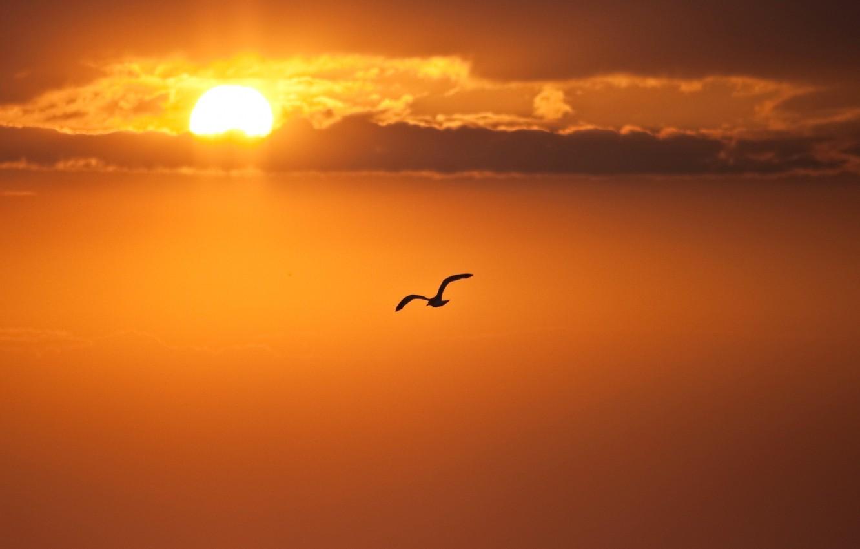 привлекает красивое фото облака птицы закат рассвет поверите, первых