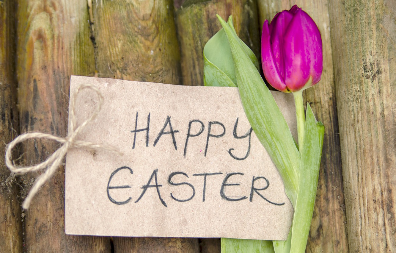 Фото обои цветы, Пасха, тюльпаны, wood, flowers, tulips, spring, Easter, purple, decoration, Happy