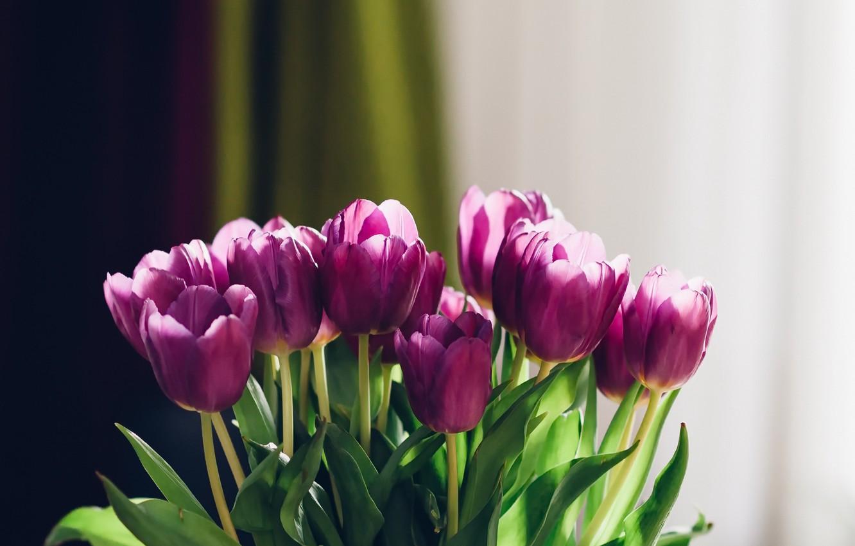 перестроил заново фото на рабочий стол цветы тюльпаны острове
