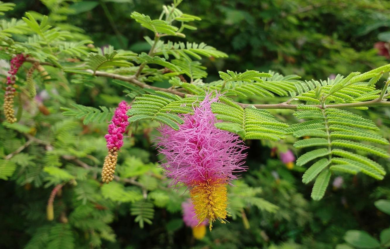 Фото обои цветы, природа, листики