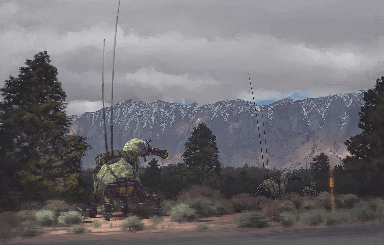 Фото обои дорога, деревья, горы, mules