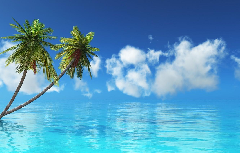 Фото обои море, тропики, пальма