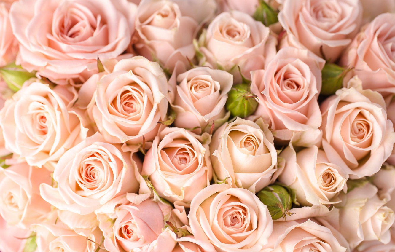 обои на самсунг розы этой части