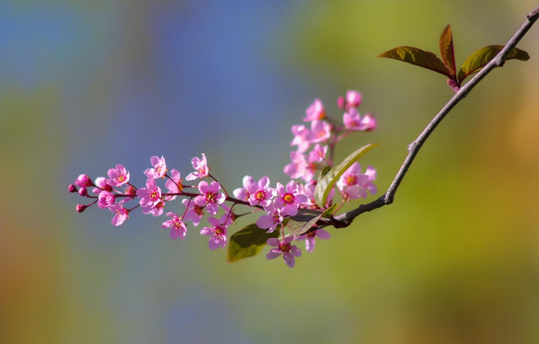 этом картинки весенних веточек и цветов дрожжевое