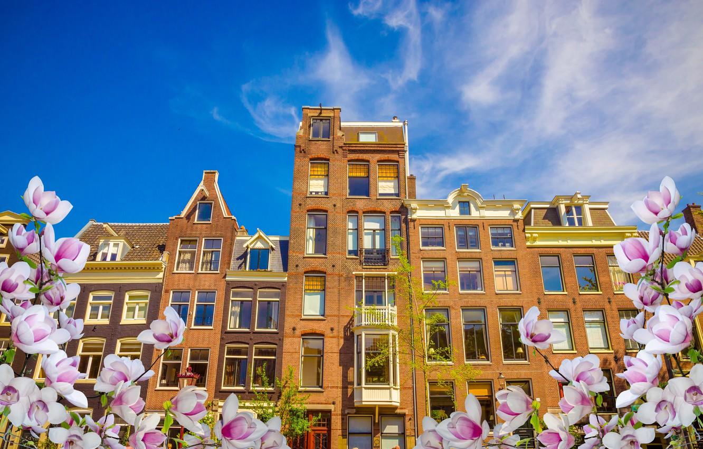 Фото обои весна, Амстердам, цветение, blossom, Amsterdam, flowers, old, spring, buildings, Netherlands