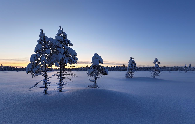 Фото обои зима, снег, утро, Finland, Lapland