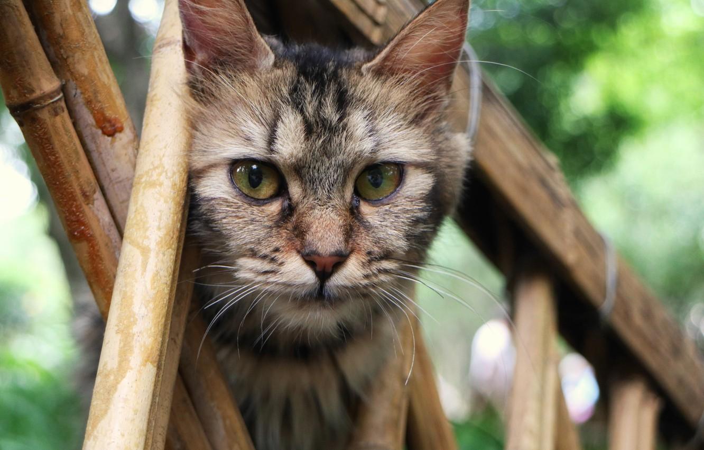 Фото обои кошка, кот, взгляд, мордочка
