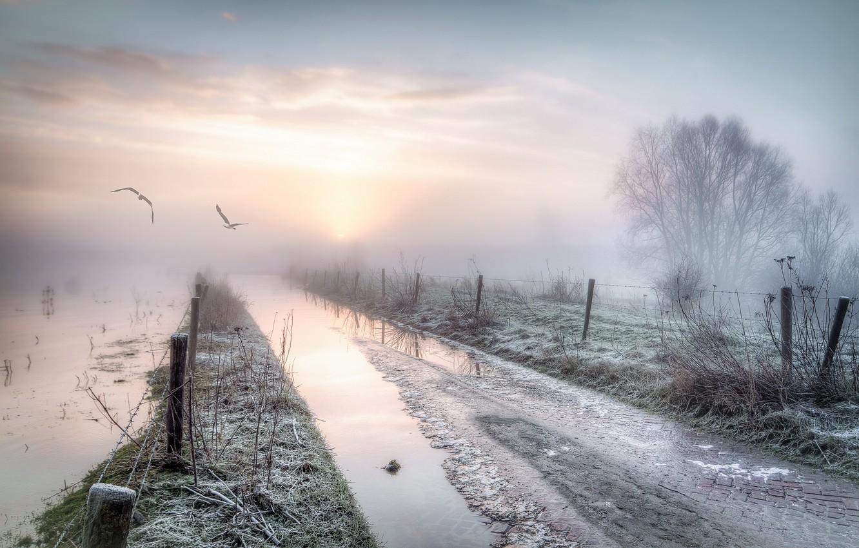 Фото обои дорога, птицы, туман, забор, утро
