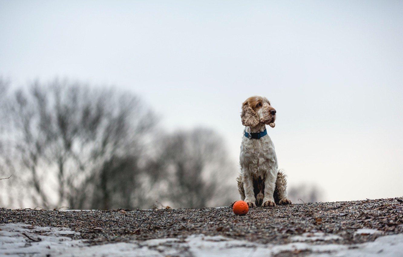 Обои Собака, мяч, друг. Собаки foto 8