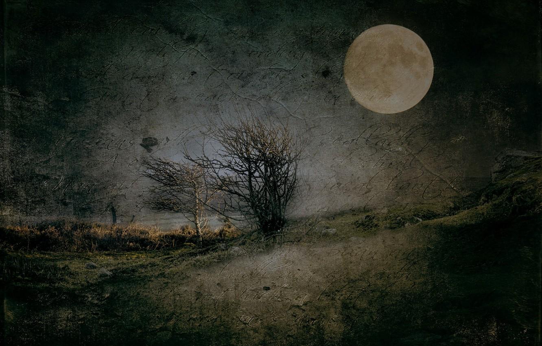 Фото обои ночь, природа, текстура
