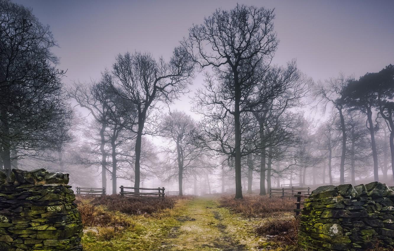 Фото обои деревья, туман, забор