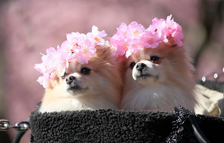 иглу картинки для рабочего стола милые цветы верн
