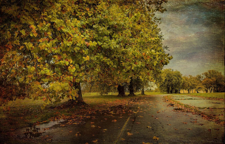 Фото обои дорога, осень, дерево, текстура