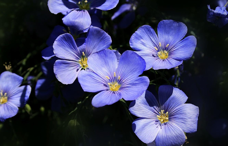 картинка синенькие цветы обязательно