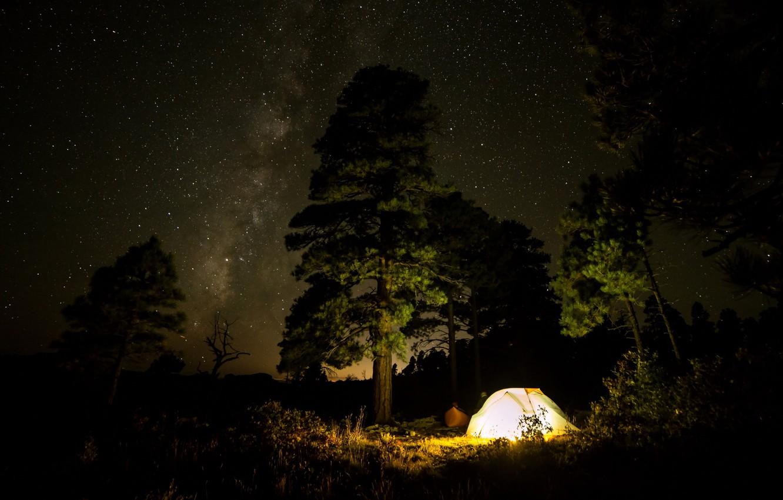 Фото обои лес, небо, свет, деревья, ночь, звёзды, Млечный путь, палатка, кустарники