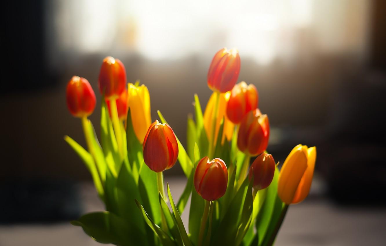 Фото обои цветы, весна, тюльпаны