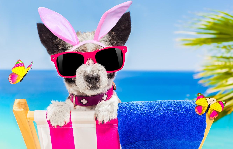 Фото обои пляж, бабочки, собака, очки, happy, beach, dog, funny, vacation, sunglasses, bunny ears