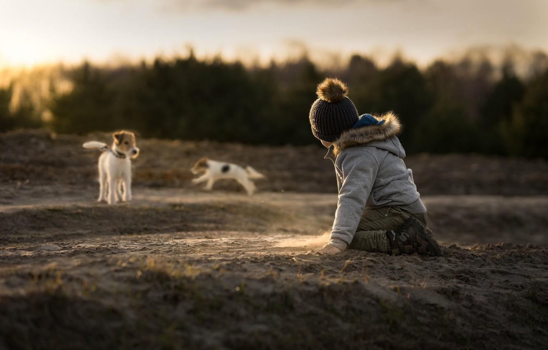 Фото обои песок, собаки, ребёнок