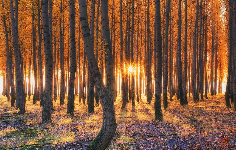 Фото обои осень, лес, свет