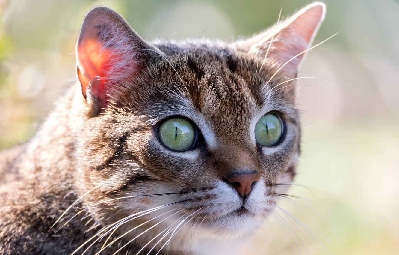 удивительная привязанность куда загрузить фото кошек успешно лечат