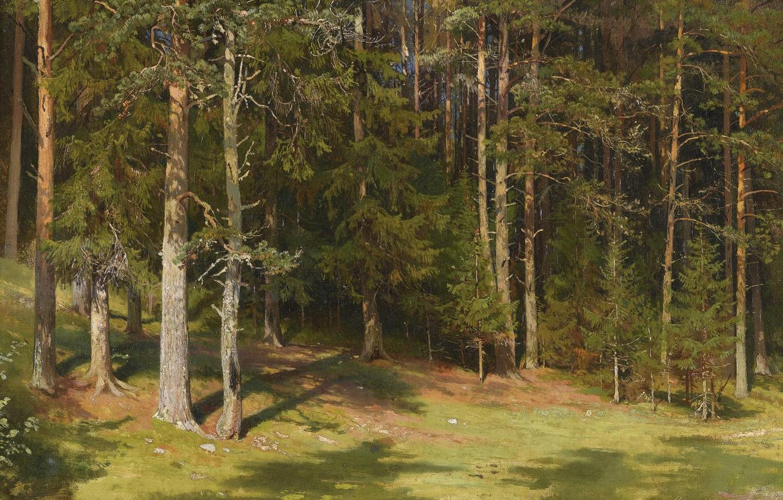 На опушке соснового леса фото