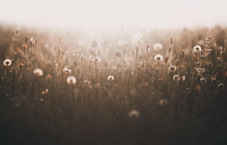 Фото обои поле, лето, природа, туман