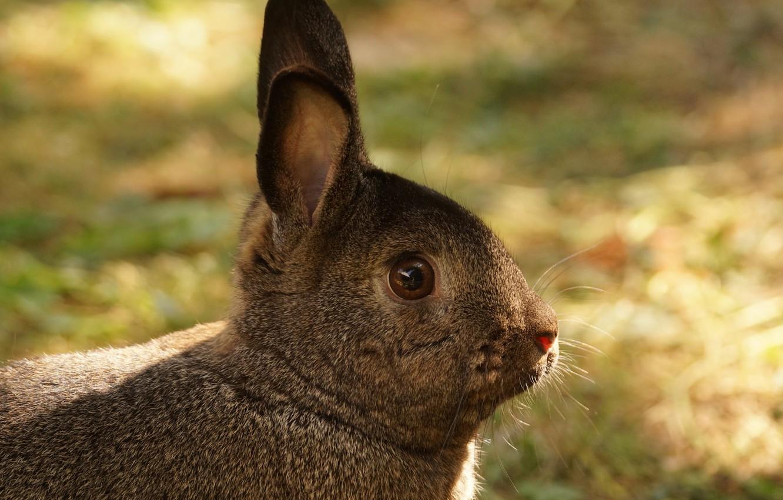 Фото обои трава, кролик, ушки, забавный