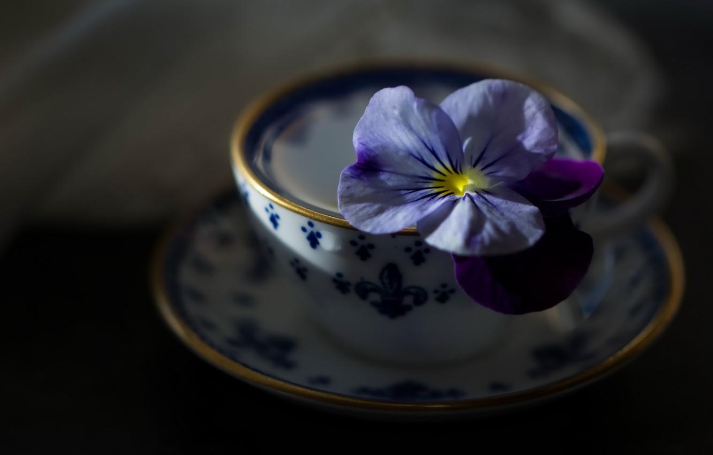 Фото обои цветок, фон, чашка