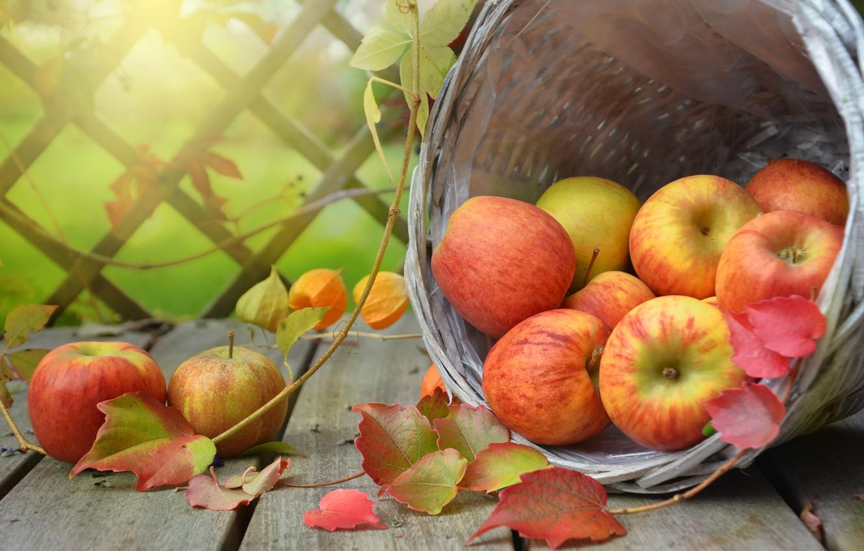 Фото обои листья, ветки, корзина, яблоки, доски, плоды, фрукты, физалис