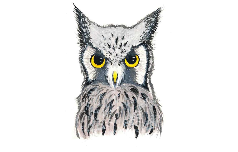Фото обои сова, птица, owl