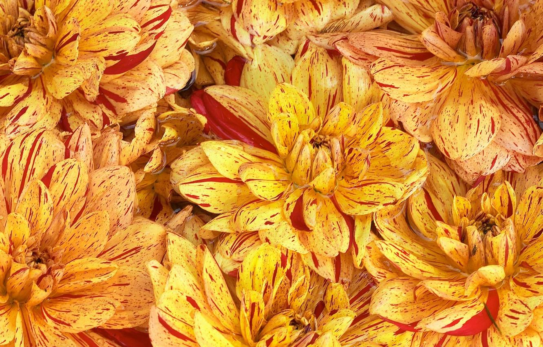 Фото обои цветы, фон, обои, краски, лепестки