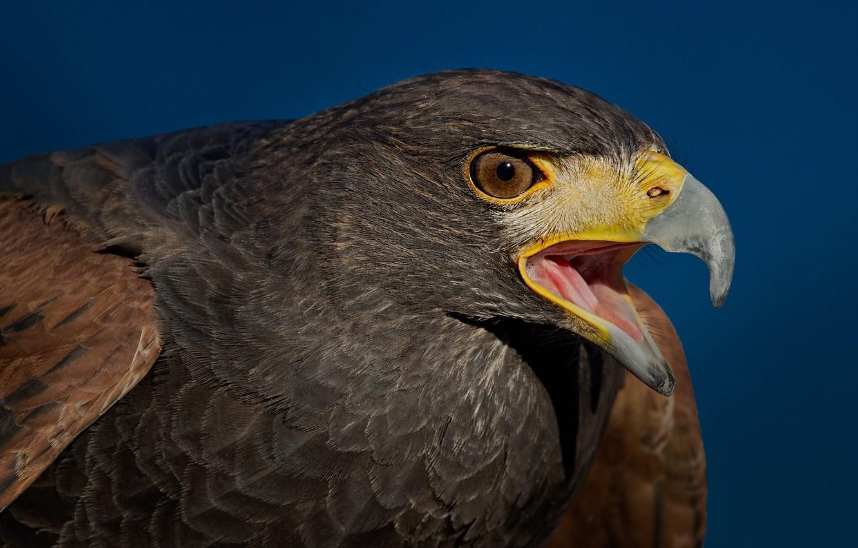 как скопировать фотографии хищных птиц пышного платья