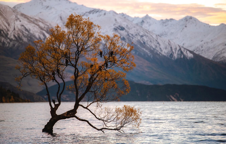 Фото обои Природа, Дерево, Озеро, Птицы, Пейзаж
