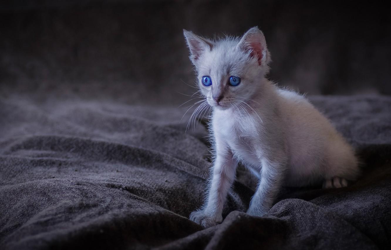 Фото обои малыш, котёнок, голубые глаза