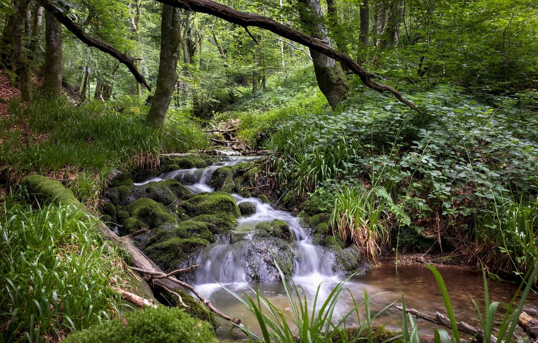 фото лесных ручьев сняв