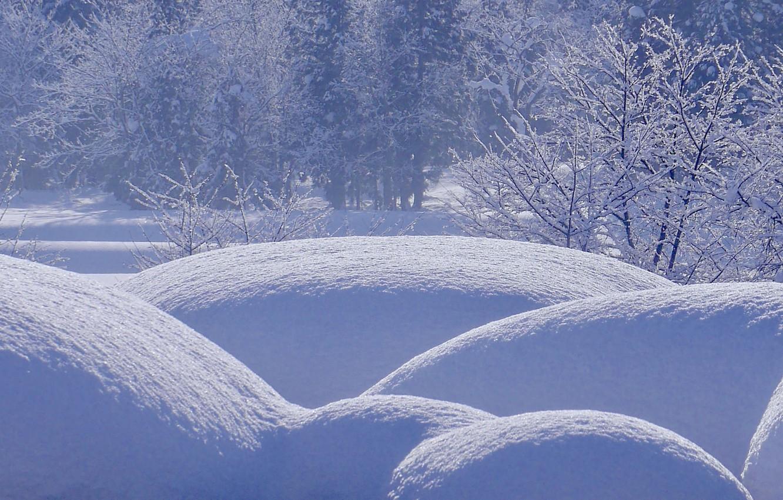 Фото обои зима, лес, снег, деревья, сугробы, кусты