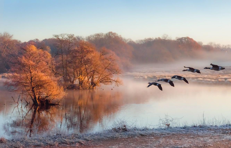 Фото обои туман, река, утки, утро