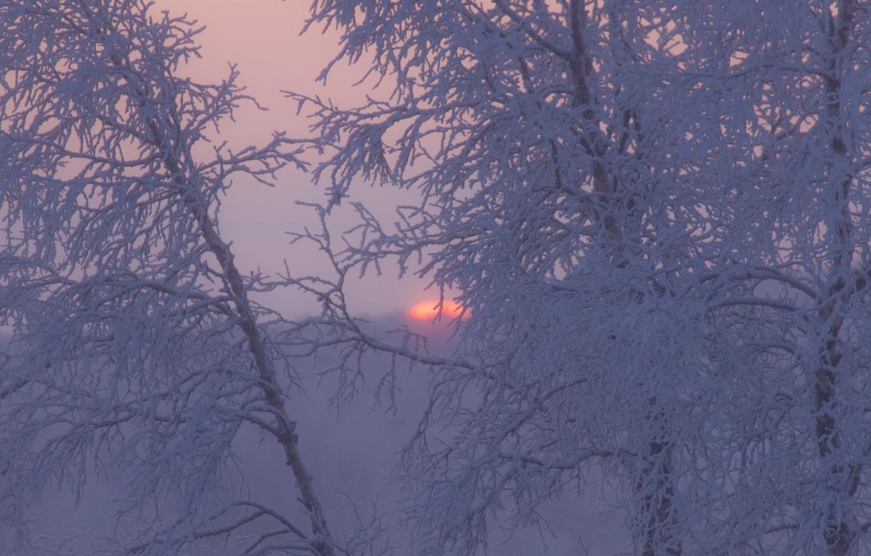 Фото обои зима, иней, деревья, закат, ветки, Швеция