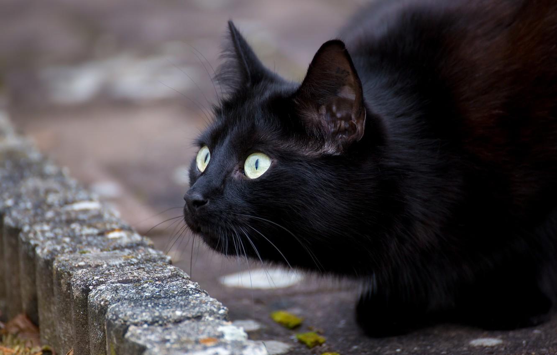 Фото обои глаза, кот, усы, черный