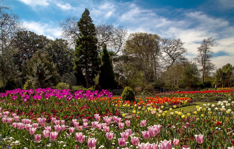 певица под обои англия лес с цветами фото шанс