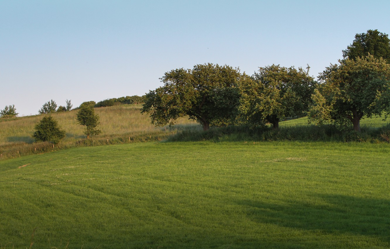 Фото обои Природа, Поле, Трава, Деревья, Nature, Grass, Field, Trees