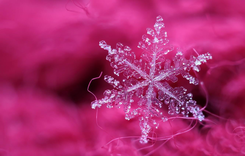 Фото обои макро, фон, снежинка
