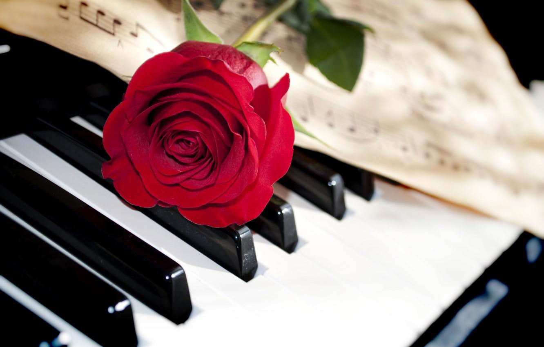 Фото обои цветок, макро, ноты, роза, клавиши, пианино, красная, крупным планом