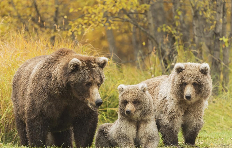 Фотографии медведей и медвежат