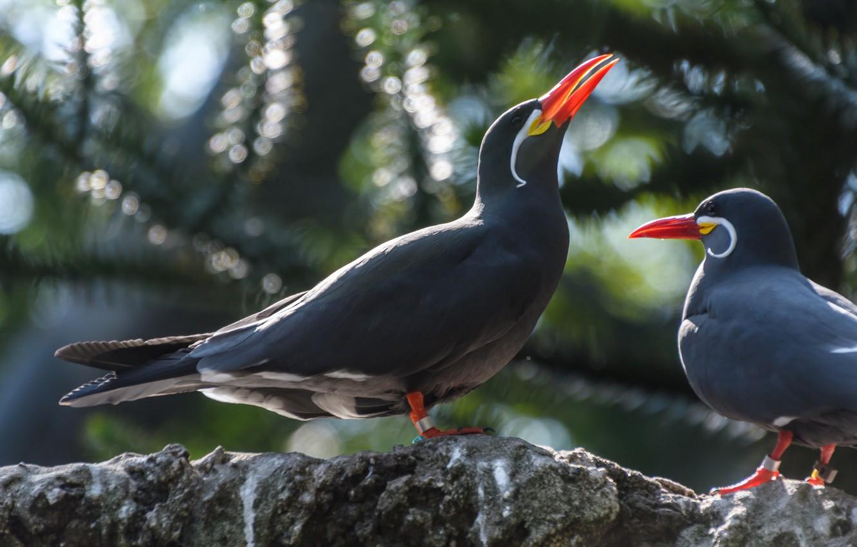 Фото обои Природа, Птица, Клюв